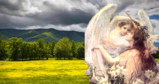 What are the differences between psychic reading and energy healing?