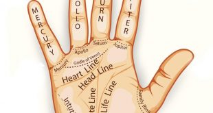Palm Reading Guide